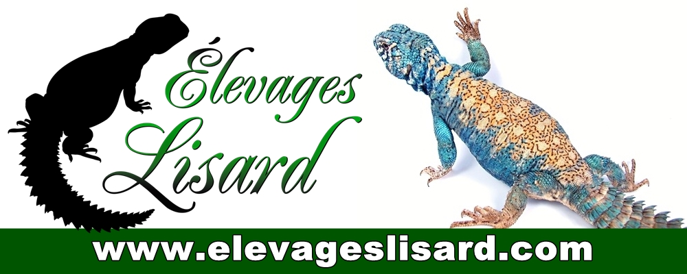 Elevages Lisard