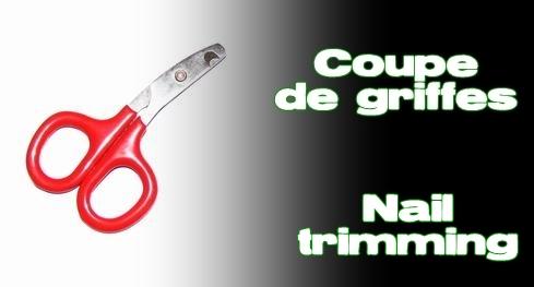 Élevages Lisard - Coupe de griffes / Nail Trimming