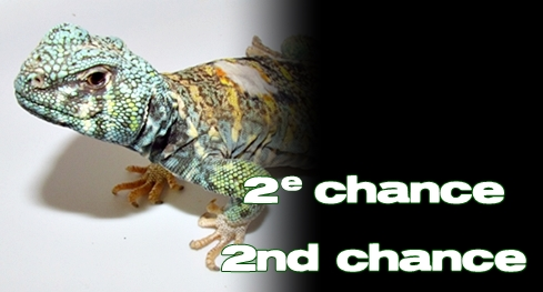 Élevages Lisard - Deuxième chance / Second chance