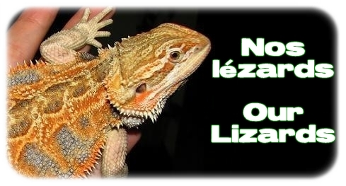Élevages Lisard - Nos lézards / Our Lizards
