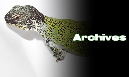 Élevages Lisard - Uromastyx nigriventris - Archives