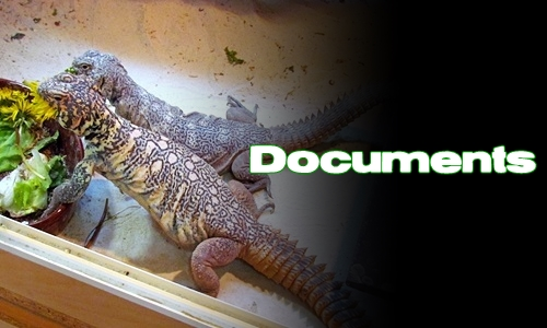 Élevages Lisard - Uromastyx yemenensis - Documents