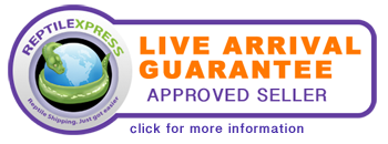 Reptile Express - Live Arrival Guanantee - Approved Seller